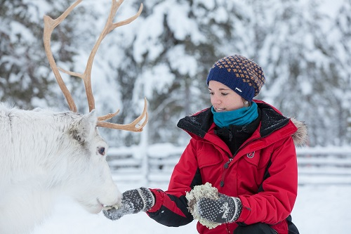 23 10 TW Harriniva Hotels & Safaris Reindeer 19 resize