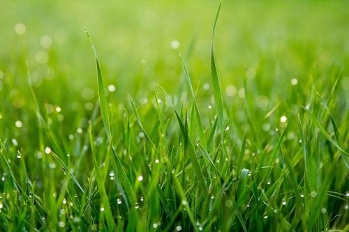 Grass resized 2