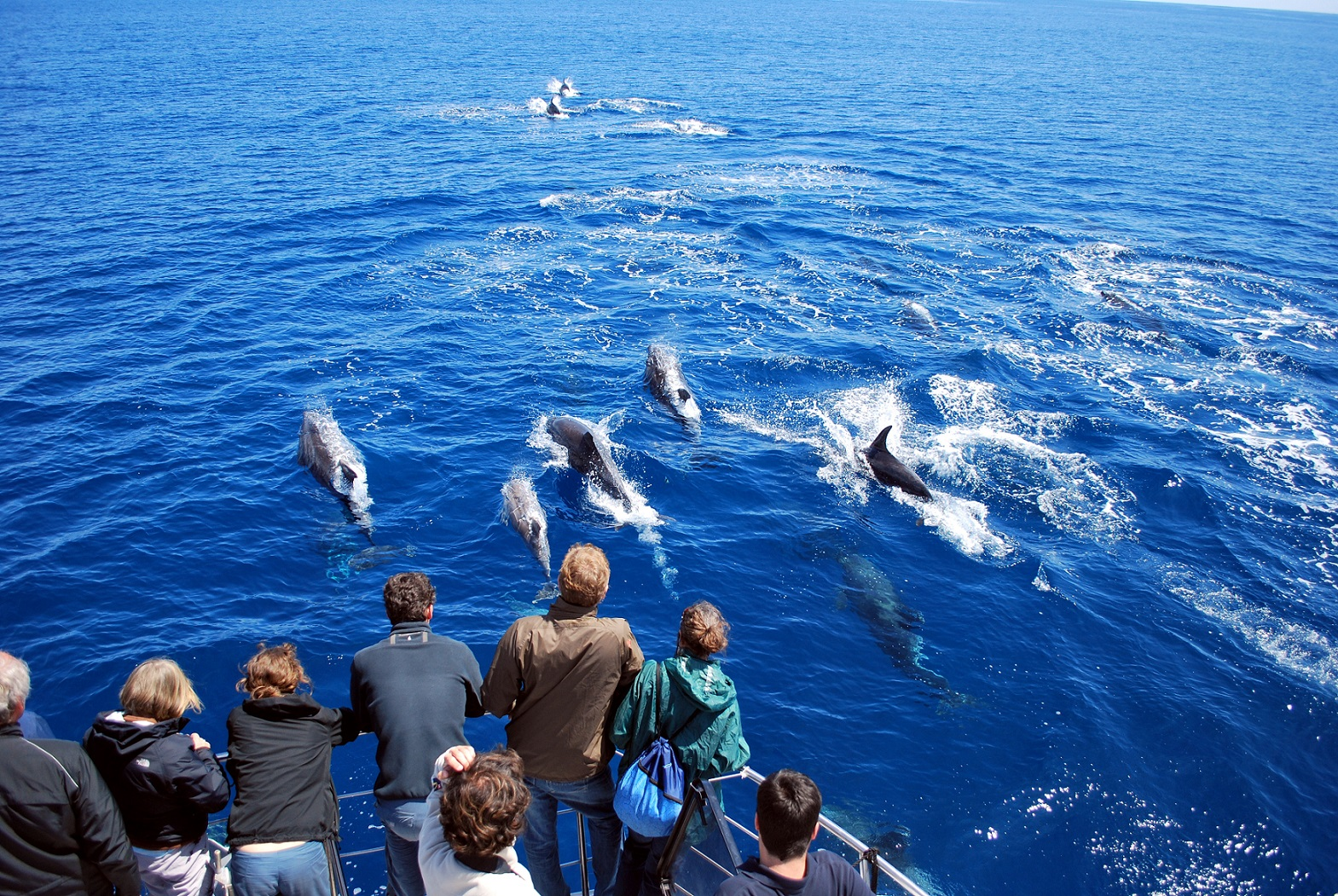 Dolphin watching 1