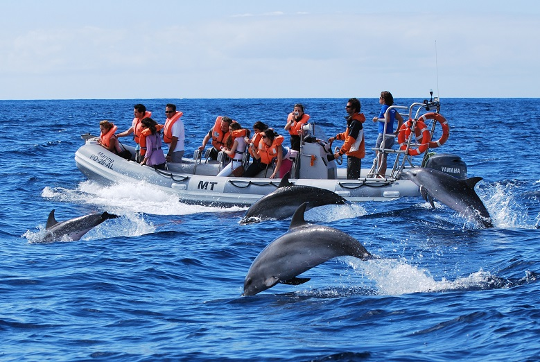 Dolphin watching 4 credit Futurismo Azores Adventures2222