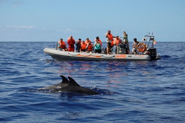 Dolphin watching Credit Rota dos Cetaceos