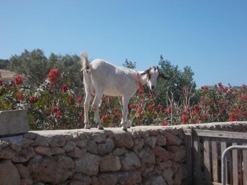 Goat Eco Day