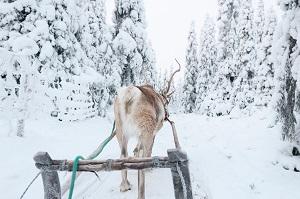 Kuusamo credit visit finland Vastavalo Matti Koutonen