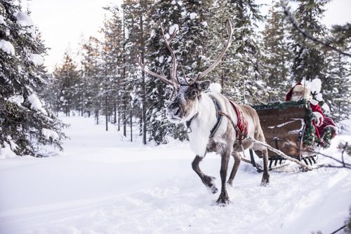 Reindeer Sled In The Snow  - Image Credit: Kimmo Syvari and Visit Finland