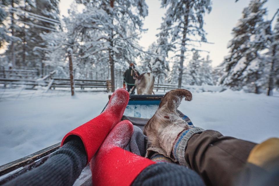 torassieppi reindeer web 123872387123