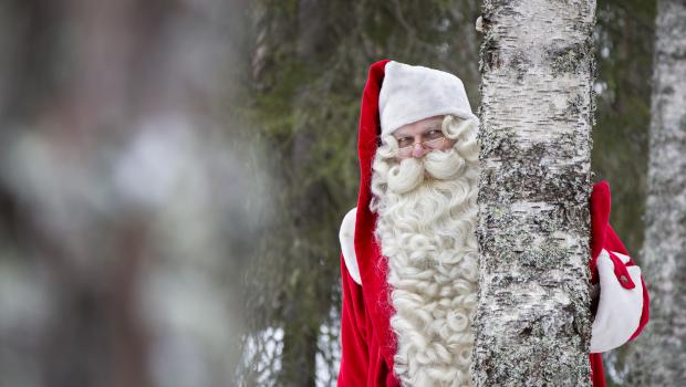 Father Christmas And Arctic Animal Encounters
