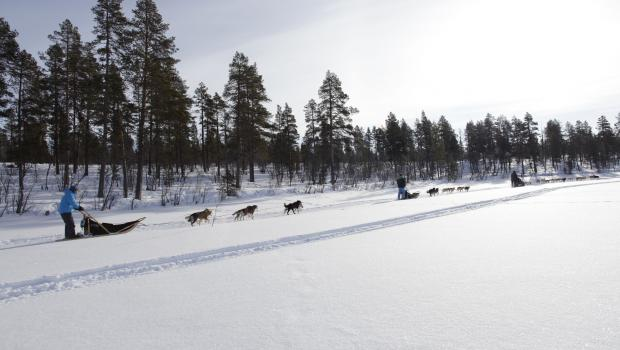 Wilderness Dog Sled Adventure and the ICEHOTEL®